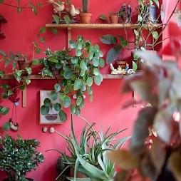 绿植图片效果图片欣赏
