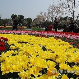 上海辰山植物园效果图库欣赏