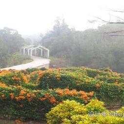 万石植物园效果图欣赏