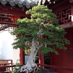 徐州植物园效果图欣赏