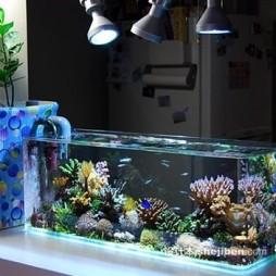 鱼缸造景效果图库大全