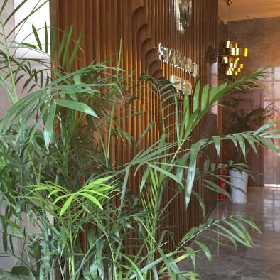 庐山星程酒店实景